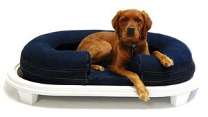 Large Dog in KEPP Chad Collection in Denim with white wood frame
