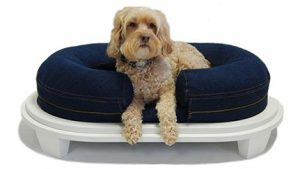 Small Dog in KEPP Chad Collection in Denim with white wood frame