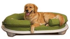 KEPP Large dog in Cody Collection in Grasshopper