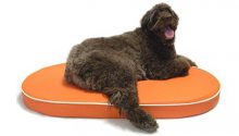 Large brown dog laying in a KEPP Lucky Collection in Clementine